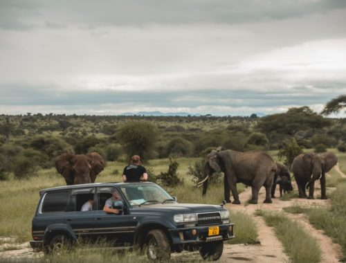 Effectuer différentes activités touristiques pour parfaire un séjour en Tanzanie